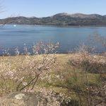 山中湖もようやく春めいてきた