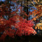 2017 山中湖の紅葉祭り 11/12(日)までライトアップです。